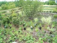 perennial planting & landscape installation