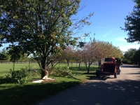 tree services & tree removal company